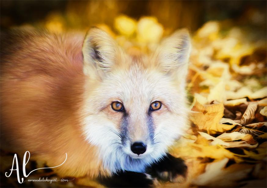 Autumn-Fox-AmandaLakeyArt.com
