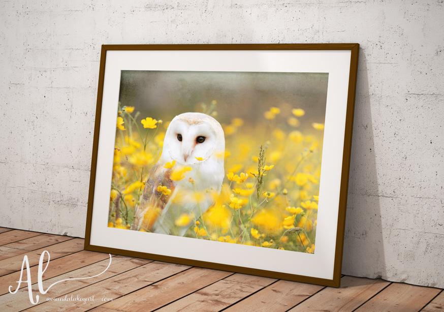Barn-Owl-Example-AmandaLakeyArt.com