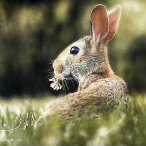 Summer-Hare-AmandaLakeyArt.com