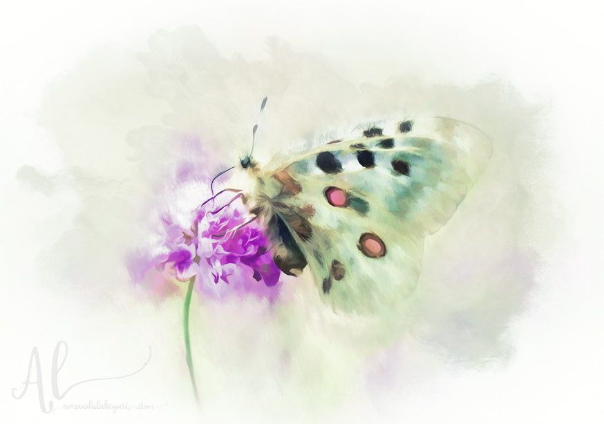Sweet-Butterfly-Nectar-AmandaLakeyArt.com