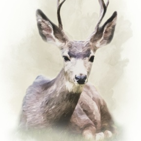 Woodland-Portrait-Deer-Amanda-Lakey