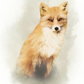 Woodland-Portrait-Fox-Amanda-Lakey