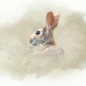 Woodland-Portrait-Hare-Amanda-Lakey