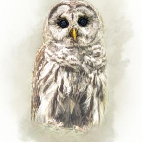 Woodland-Portrait-Owl-Amanda-Lakey