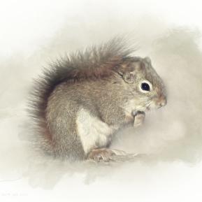 Woodland-Portrait-Squirrel-Amanda-Lakey