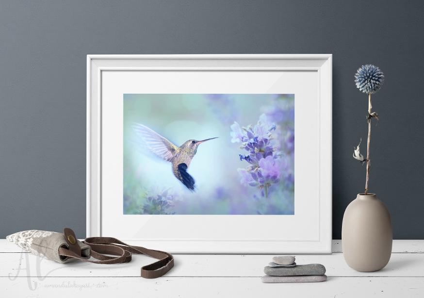 Humingbird-Dreams-Product1-AmandaLakeyArt.com