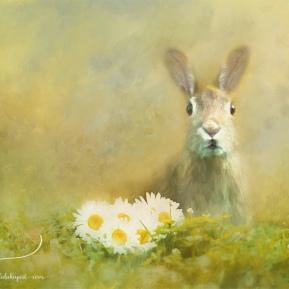 Spring-Hare-AmandaLakeyArt.com