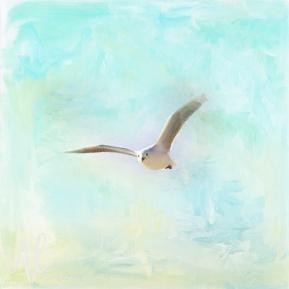 Tranquil-Shores---Gull-AmandaLakeyArt.com