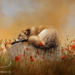 When-Foxes-Dream-AmandaLakeyArt.com