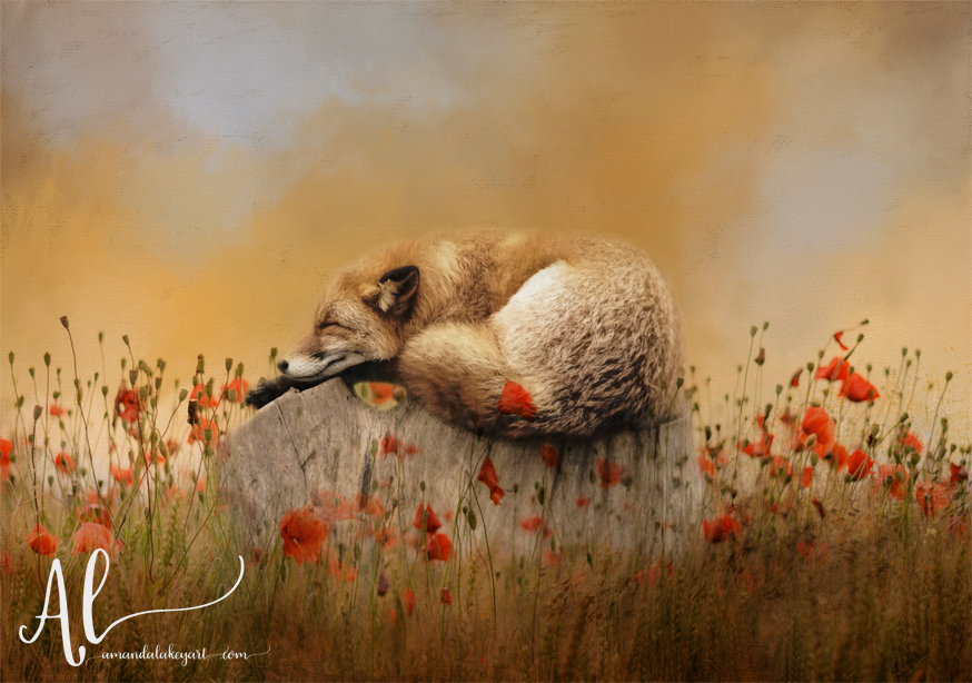 When-Foxes-Dream-AmandaLakeyArt.com