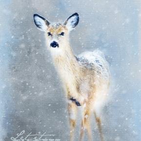 Doe-In-The-Snow-Amanda-Lakey