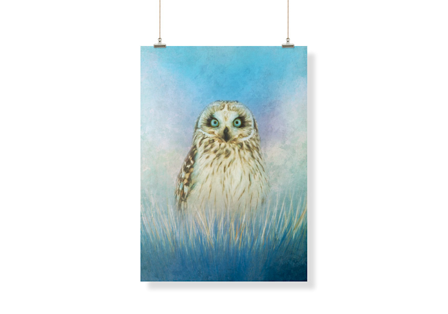 Wise-Owl-Example-Amanda-Lakey