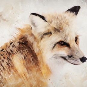Painted-Fox-Amanda-Lakey