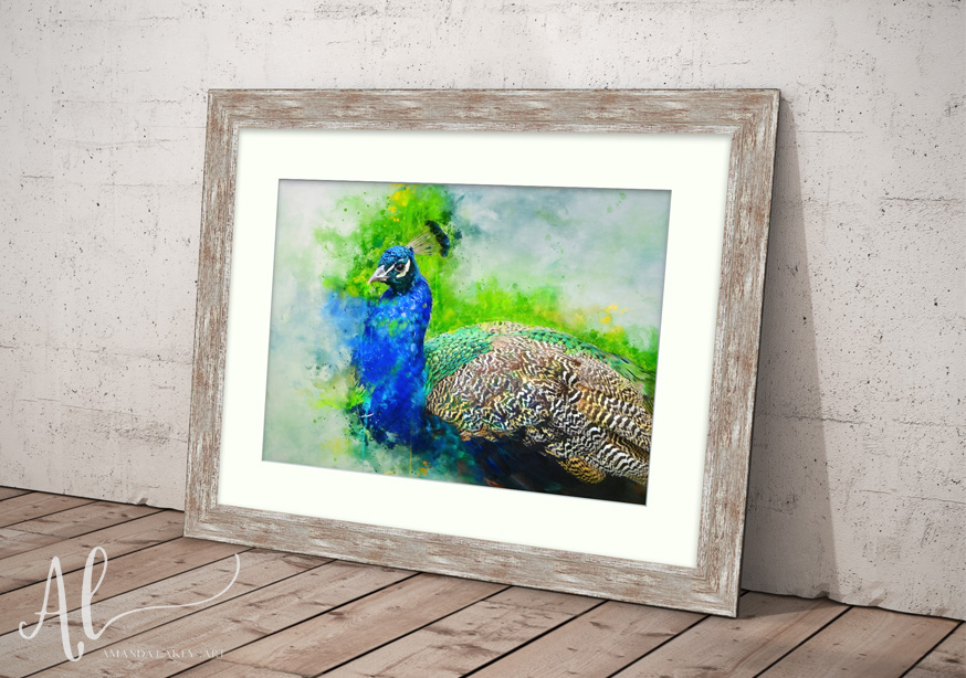 Painted-Peacock-WEB-Amanda-Lakey