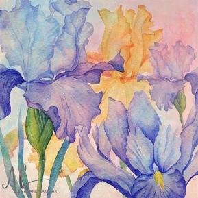 Angel iris